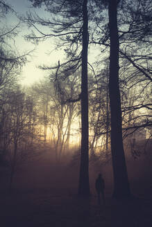 Silhouette of man standing between trees in the evening - DWIF01039