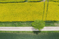 Germany, Bavaria, Regensburg, Aerial view of empty country road along rapeseed field in summer - MMAF01136