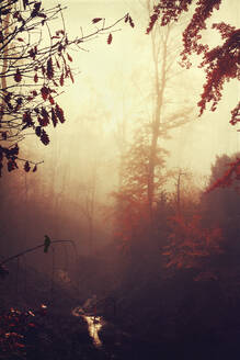 Germany, Wuppertal, scenic view of foggy forest - DWIF01046