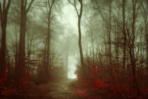 Germany, Wuppertal, scenic view of foggy forest - DWIF01052