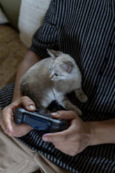 Man playing video game with kitten on his lap - AFVF04002