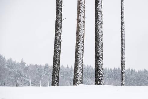 Trees at winter - JOHF01949