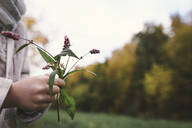 Girl's hands holding picked flowers in autumn, close-up - EYAF00506