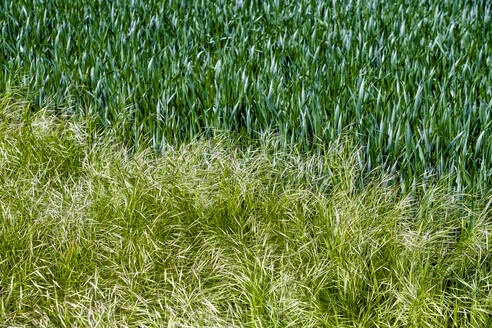 Germany, Bavaria, Baden-Wuerttemberg, close-up of grass - EGBF00346