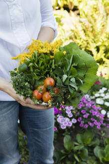 Woman holding bowl of harvested wild herbs sorrel, oregano, coltsfoot, herb gerard, nettle, goldenrod and tomatoes - EVGF03479