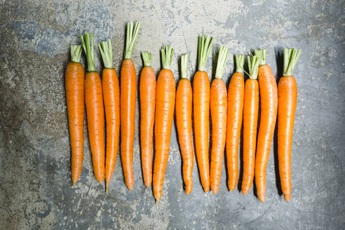 Row of carrots - STBF00448