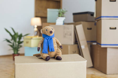 Cuddly toy on cardboard box in an empty room in a new home - MAMF00806