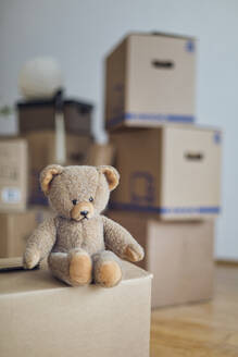 Teddy bear on cardboard box in an empty room in a new home - MAMF00809