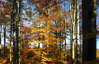 Autumn forest, Saxony, Germany - JTF01395
