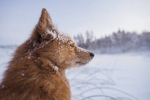 Dog at winter - JOHF02808