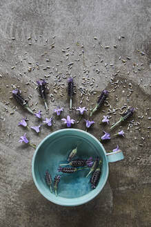 Cap and lavender flowers - JOHF02892