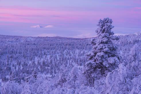 Winter landscape at sunset - JOHF03087