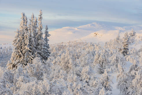 Winter landscape - JOHF03093