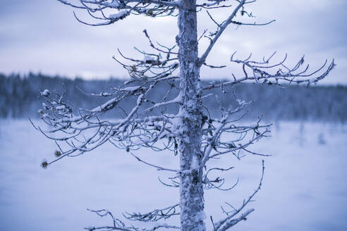 Tree at winter - JOHF03114