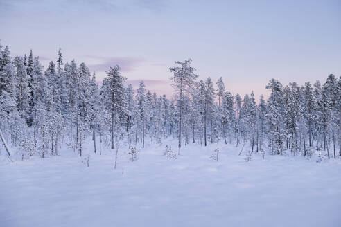 Winter landscape at sunset - JOHF03117