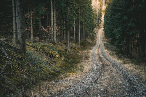 Dirt road in forest - JOHF03189