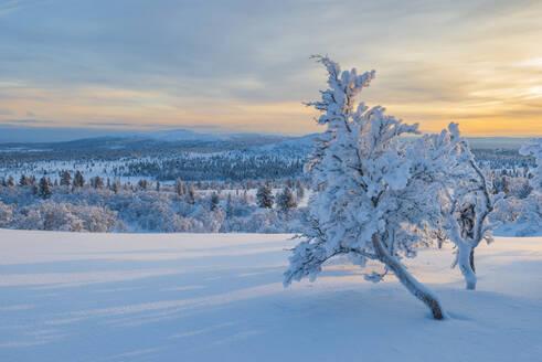 Winter landscape - JOHF03606