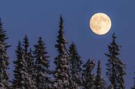 Full moon above trees - JOHF04140