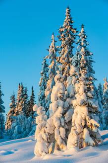 Trees at winter - JOHF04146