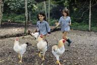 Two children chasing chickens on an organic farm - SODF00097