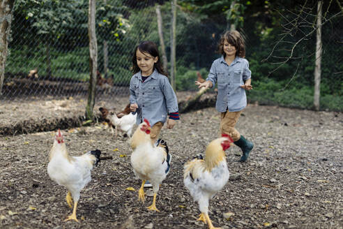 Two children chasing chickens on an organic farm - SODF00097