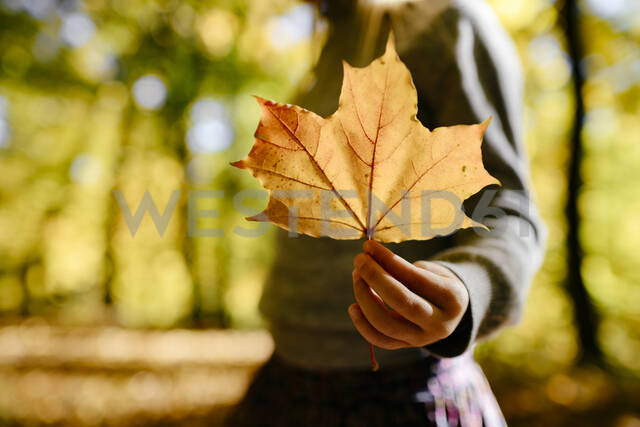 Girl's hand holding autumn leaf, close-up - EYAF00593 - Ekaterina Yakunina/Westend61