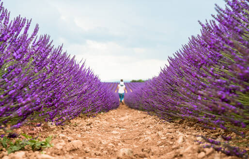 Mother and daughter walking among lavender fields in the summer - CAVF65571