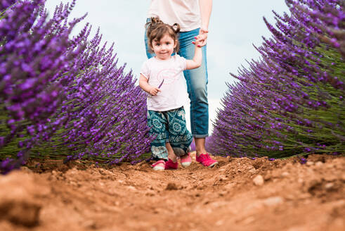 Little toddler girl walking among lavender fields in the summer - CAVF65577