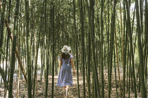 Rear view of woman walking in a bamboo forest, Aveiro, Portugal - AHSF00943