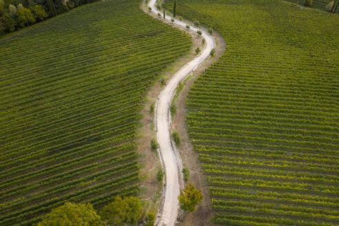 Italy, Friuli Venezia Giulia, Brazzano, Aerial view of winding country road across vast green vineyard - MAUF02972