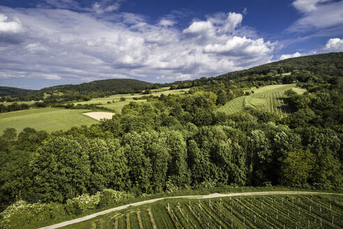aerial drone flight in may over green hills and vineyards in austria, lower austria - HMEF00634