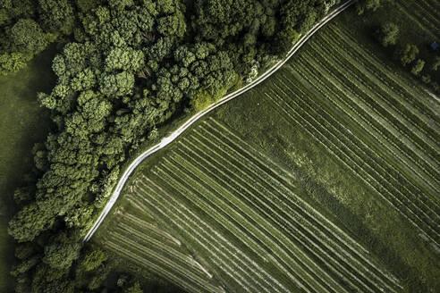 Austria, Lower Austria, Aerial view of dirt road along green vast vineyard - HMEF00637