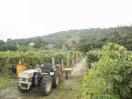 Tractor in vineyard, Galicia, Spain - AHSF00983