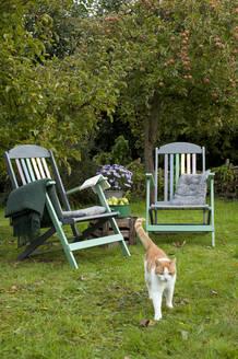 Deutschland - Hamburg - Altes Land - DIY Regenbogen Stühle - etwas Farbe im herbstlichen Garten - Requisite: rot weiße Katze, Emailletopf mit Birnen, Astern, Buch, Wolldecke, Liegestühle - GISF00475
