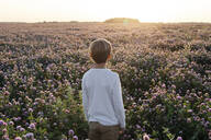 Boy standing on a clover field - EYAF00617