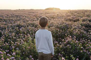 Boy standing on a clover field - EYAF00617