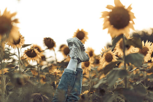 Shoes in a field of sunflowers - OCAF00431