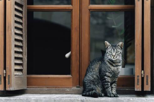 Portrait of tabby cat sitting on window sill - GEMF03242