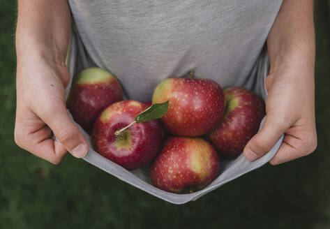 Close up of hands holding edge of shirt that is filled with apples. - CAVF66939