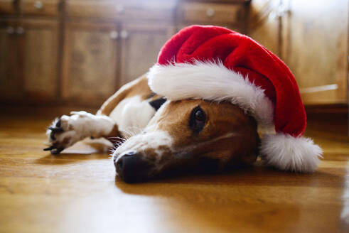 Portrait of dog wearing Santa hat while lying on floor at home - CAVF67167