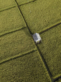 Aerial view of rice fields - CAVF67622