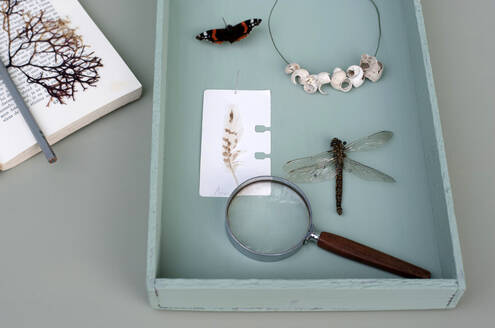 Germany, Hamburg, Insects, shells and magnifying glass in wooden tray - GISF00478