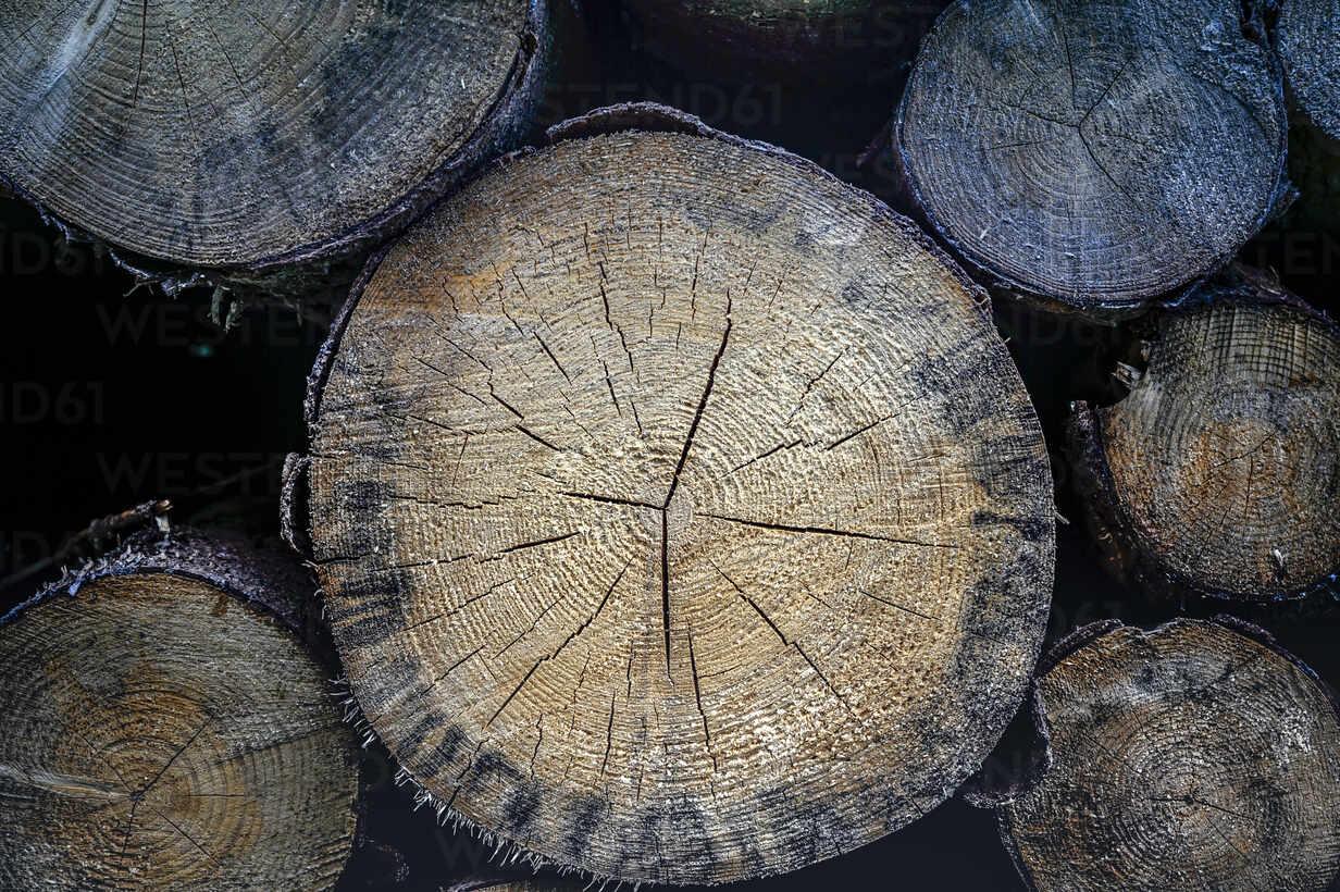 Close-up of stack of wood - FRF00884 - Frank Röder/Westend61