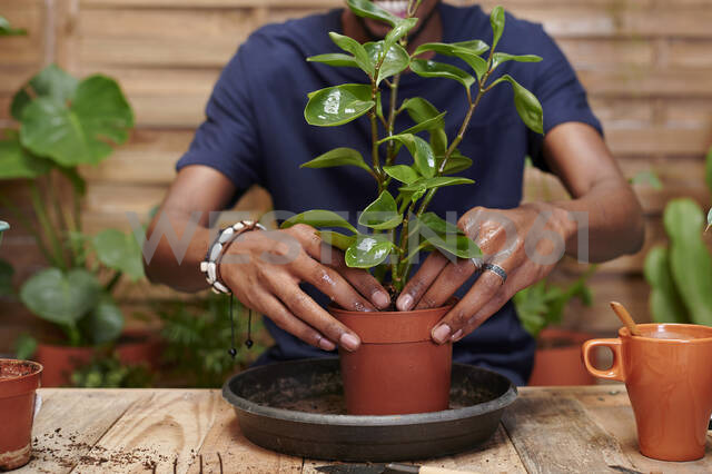 Young man repotting a plant on his terrace - IGGF01381 - Ivan Gener/Westend61