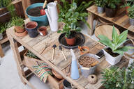 Wooden table with potted plants and gardening tools on a terrace - IGGF01384