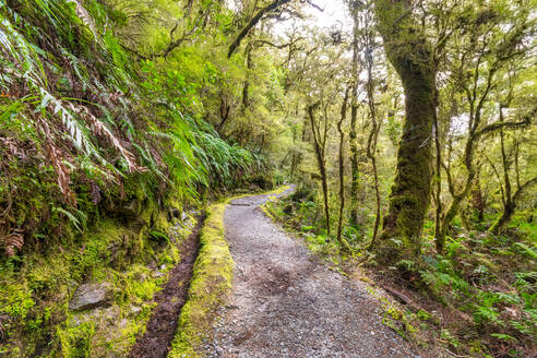 Fiordland National Park, track through rainforest, South Island, New Zealand - SMAF01664