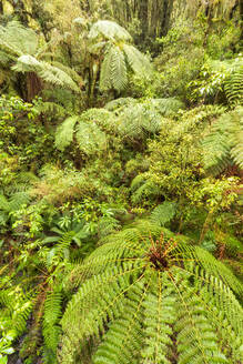Rainforest and ferns, Fiordland National Park, South Island, New Zealand - SMAF01676