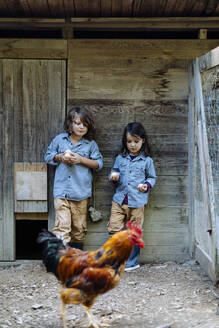 Two kids standing in chicken coop on an organic farm - SODF00299