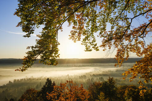 Germany, Bavaria, Icking, Beech tree branches against rising sun illuminating misty forest in autumn - SIEF09280