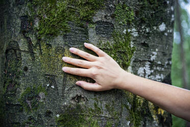 Female hand touching a tree - MAMF00950